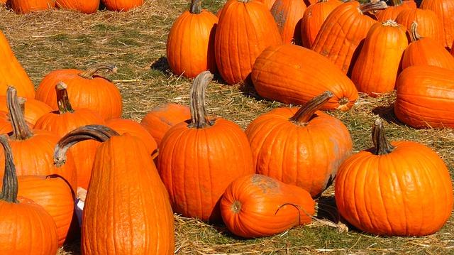 Pumpkin Lane @ Pomeroy Farm. @ Pomoeroy Farms | Yacolt | Washington | United States